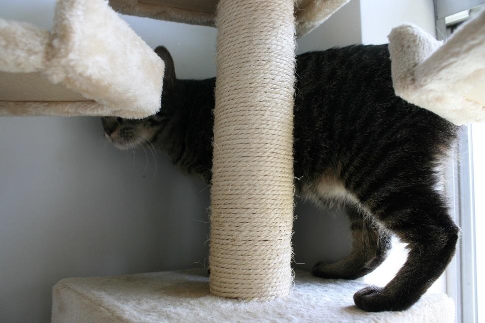 【猫・移動先募集】多頭崩壊16匹他_f0242002_20260670.jpg