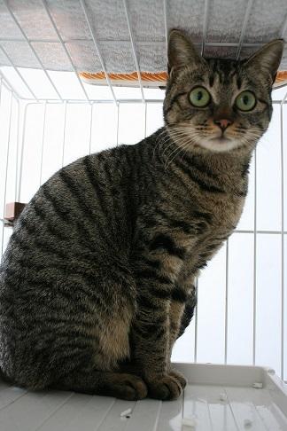 【猫・移動先募集】多頭崩壊16匹他_f0242002_20262037.jpg