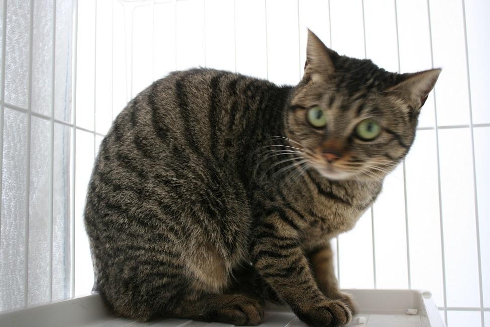 【猫・移動先募集】多頭崩壊16匹他_f0242002_20262774.jpg