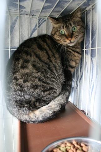 【猫・移動先募集】多頭崩壊16匹他_f0242002_20263576.jpg