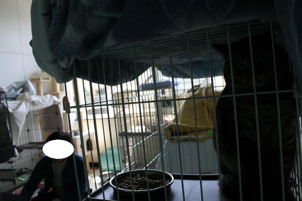 【猫・移動先募集】多頭崩壊16匹他_f0242002_20264496.jpg