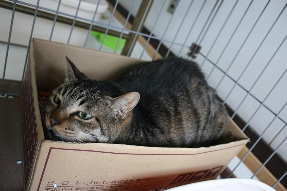 【猫・移動先募集】多頭崩壊16匹他_f0242002_20275596.jpg