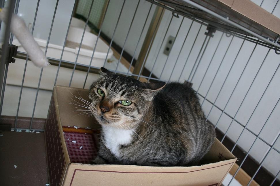 【猫・移動先募集】多頭崩壊16匹他_f0242002_20280201.jpg