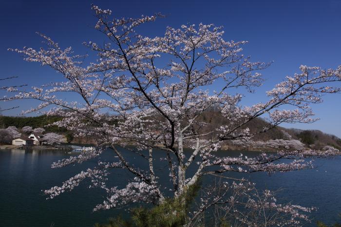 湖畔の朝 _a0357206_20002412.jpg