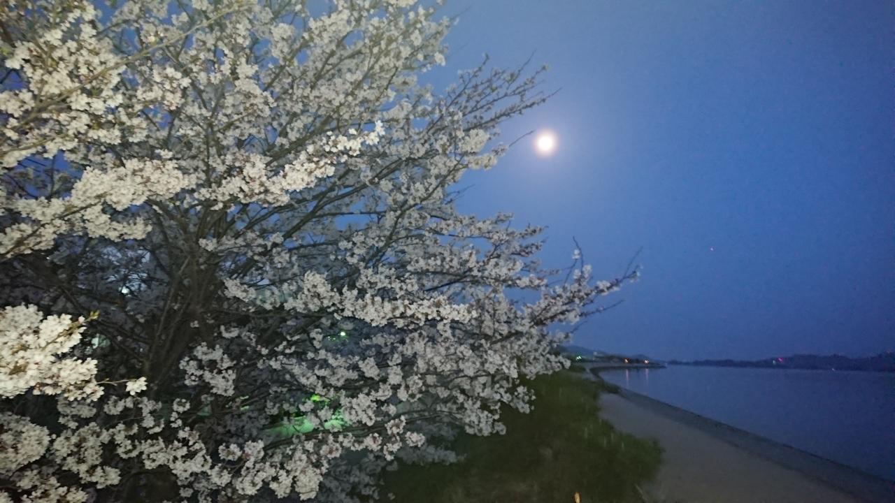 2018桜満開!_c0339918_10461543.jpg