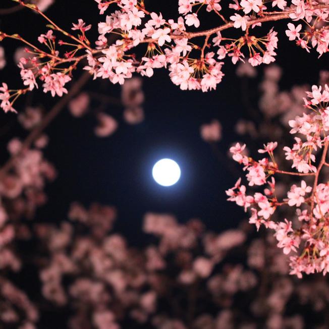 満月と女神たちの宴_a0329820_20031417.jpg