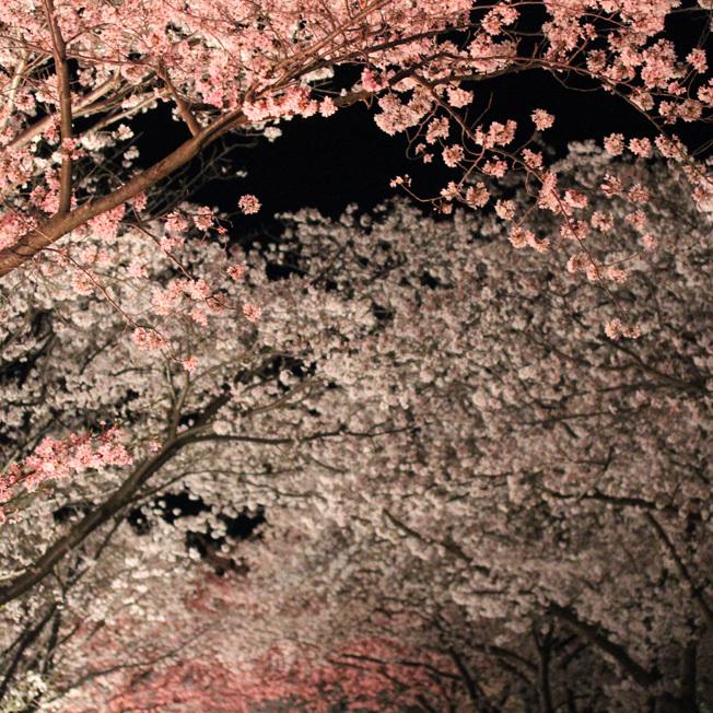 満月と女神たちの宴_a0329820_20031820.jpg
