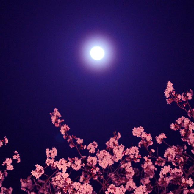 満月と女神たちの宴_a0329820_20032235.jpg