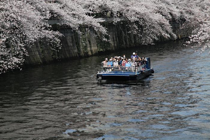 東京都目黒区 「大都会の桜 ー 人との係り」 ④_d0106628_09321262.jpg