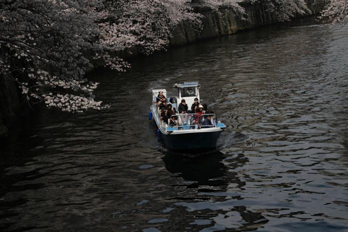 東京都目黒区 「大都会の桜 ー 人との係り」 ④_d0106628_09383012.jpg