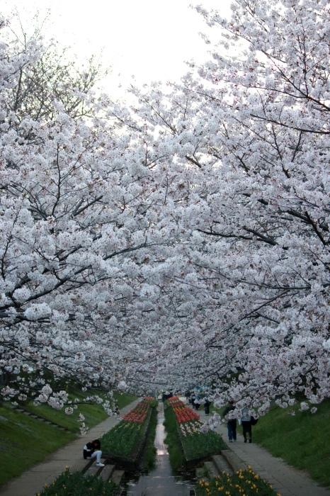 【江川せせらぎ緑道】_f0348831_09020330.jpg