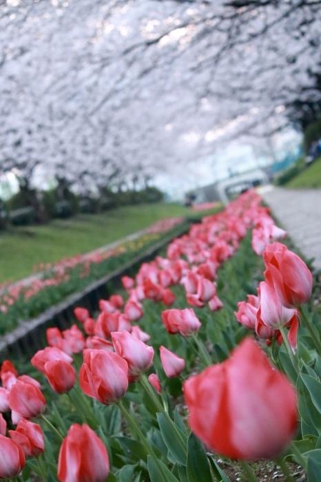 【江川せせらぎ緑道】_f0348831_09021476.jpg