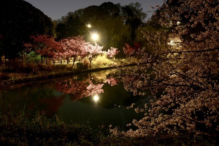 【三ツ池公園】_f0348831_09071504.jpg