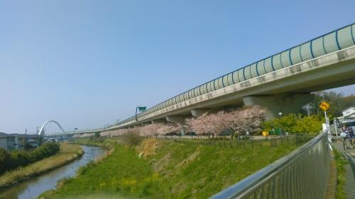 桜祭り..._b0137932_10044992.jpg