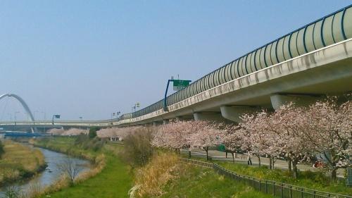 桜祭り..._b0137932_10063605.jpg