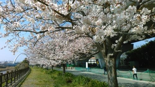 桜祭り..._b0137932_10073716.jpg