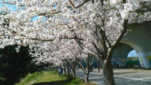 桜祭り..._b0137932_10091377.jpg