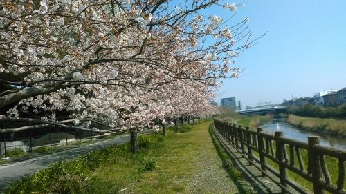 桜祭り..._b0137932_10100345.jpg
