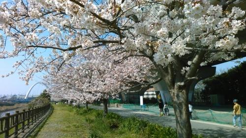桜祭り..._b0137932_10133816.jpg