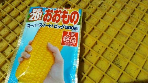 トウモロコシの定食..種まき_b0137932_12082567.jpg