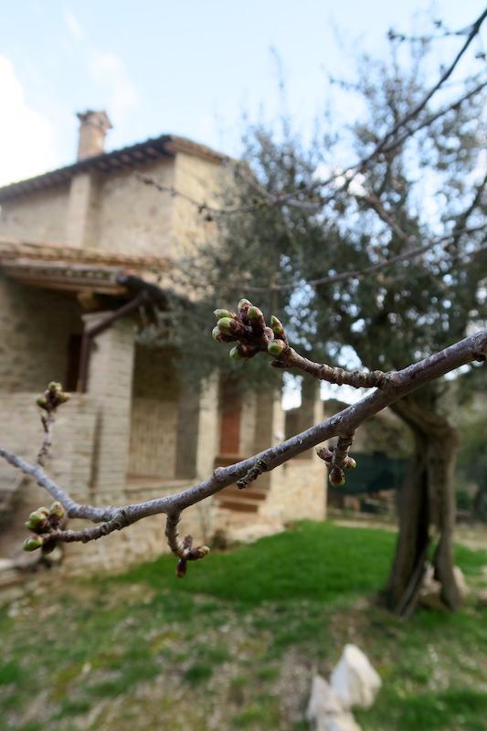 アーモンド・野スミレ花咲くミジャーナの春、イタリア_f0234936_6455194.jpg