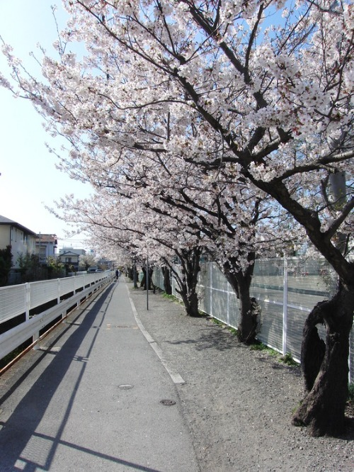 アルミアート ~ 桜 ~_e0222340_14541268.jpg