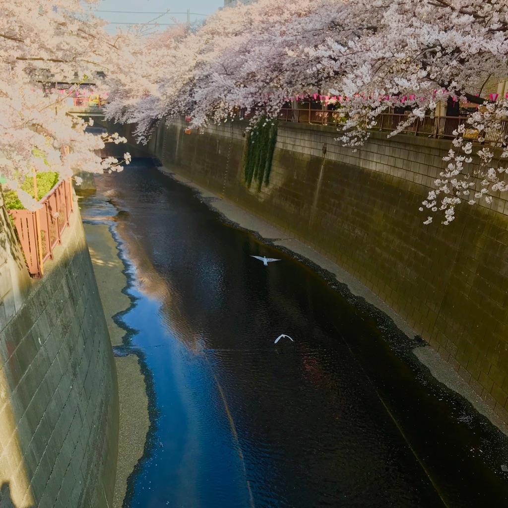 桜の季節に_a0060141_71086.jpg