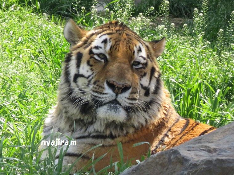 天王寺動物園(3.29 木)_f0002743_1553692.jpg