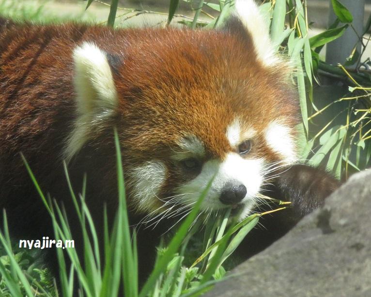 天王寺動物園(3.29 木)_f0002743_1604013.jpg