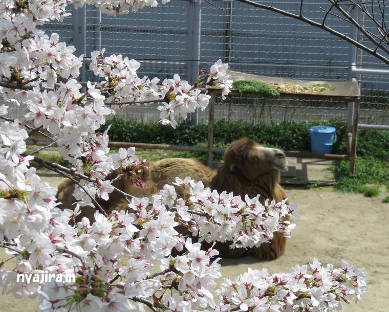 天王寺動物園(3.29 木)_f0002743_1664222.jpg