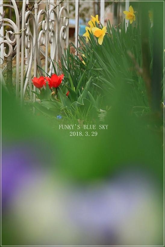 春の庭* & 春の食材_c0145250_08494428.jpg