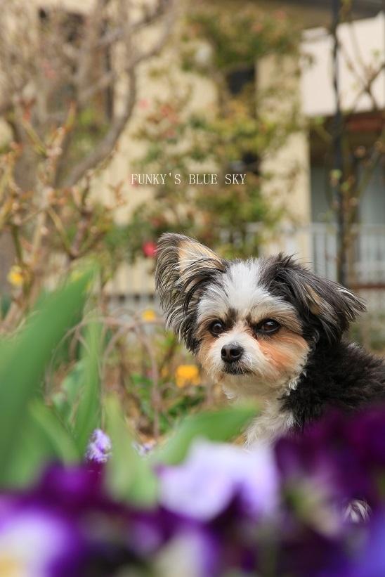 春の庭* & 春の食材_c0145250_08494606.jpg