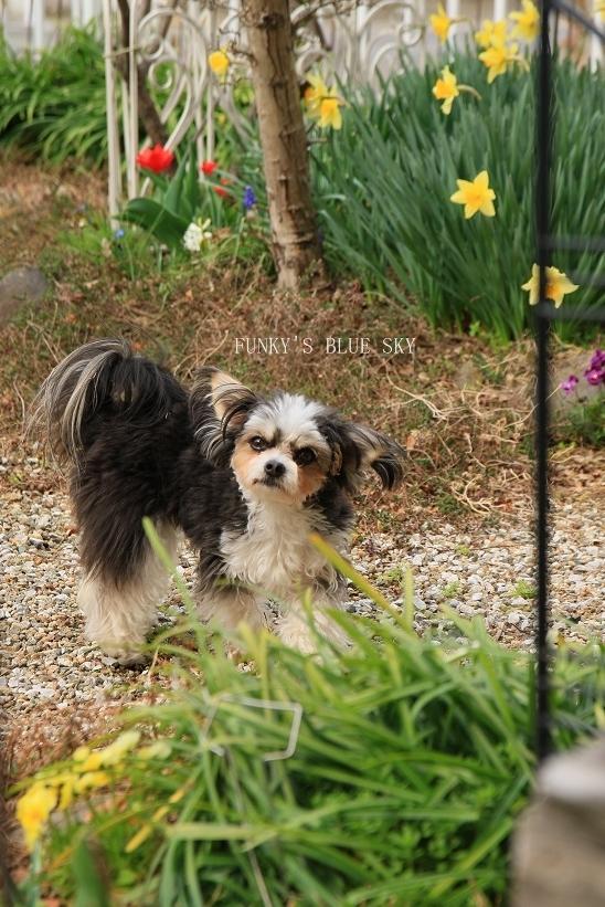 春の庭* & 春の食材_c0145250_08494951.jpg