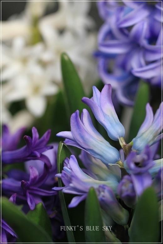 春の庭* & 春の食材_c0145250_08495241.jpg