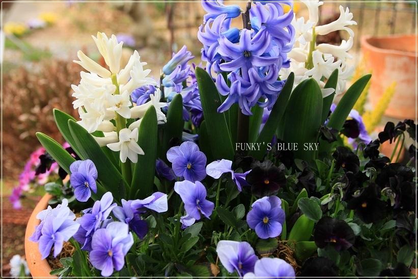 春の庭* & 春の食材_c0145250_08495546.jpg