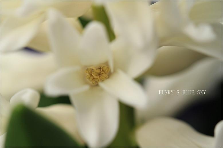 春の庭* & 春の食材_c0145250_08495820.jpg