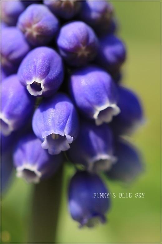 春の庭* & 春の食材_c0145250_08500431.jpg