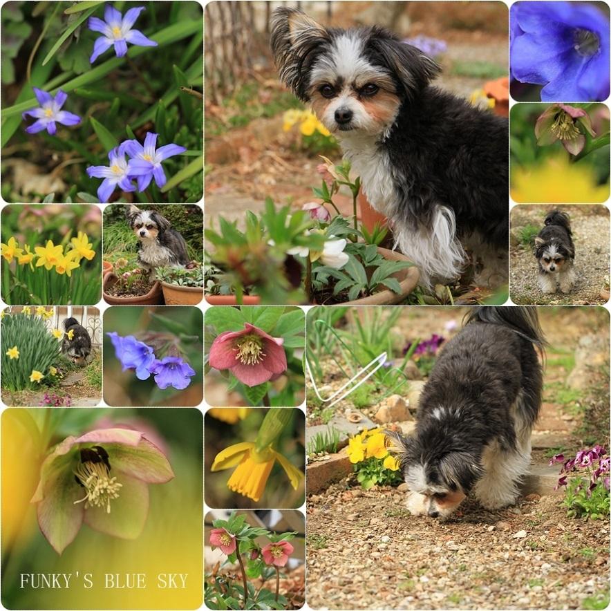 春の庭* & 春の食材_c0145250_08505404.jpg