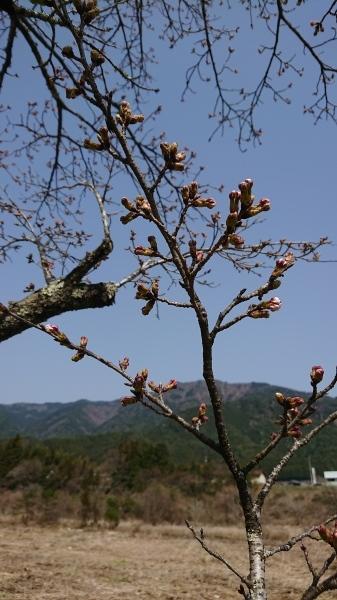 はる🌸春🌻・・・情報❣_e0020051_09244034.jpg