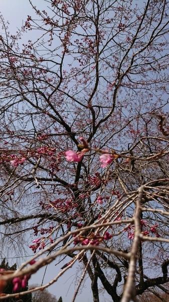 はる🌸春🌻・・・情報❣_e0020051_09253571.jpg