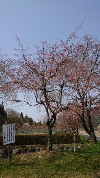はる🌸春🌻・・・情報❣_e0020051_09255790.jpg