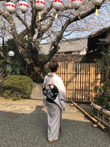 桜の下のお客様・桜色のきものに桜の帯・大島に絞りの帯_f0181251_10463234.jpg