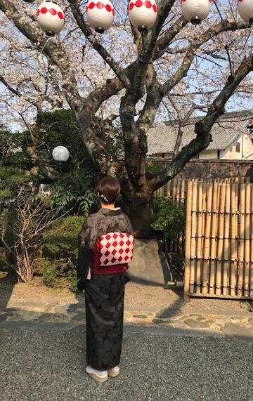 桜の下のお客様・桜色のきものに桜の帯・大島に絞りの帯_f0181251_10515492.jpg