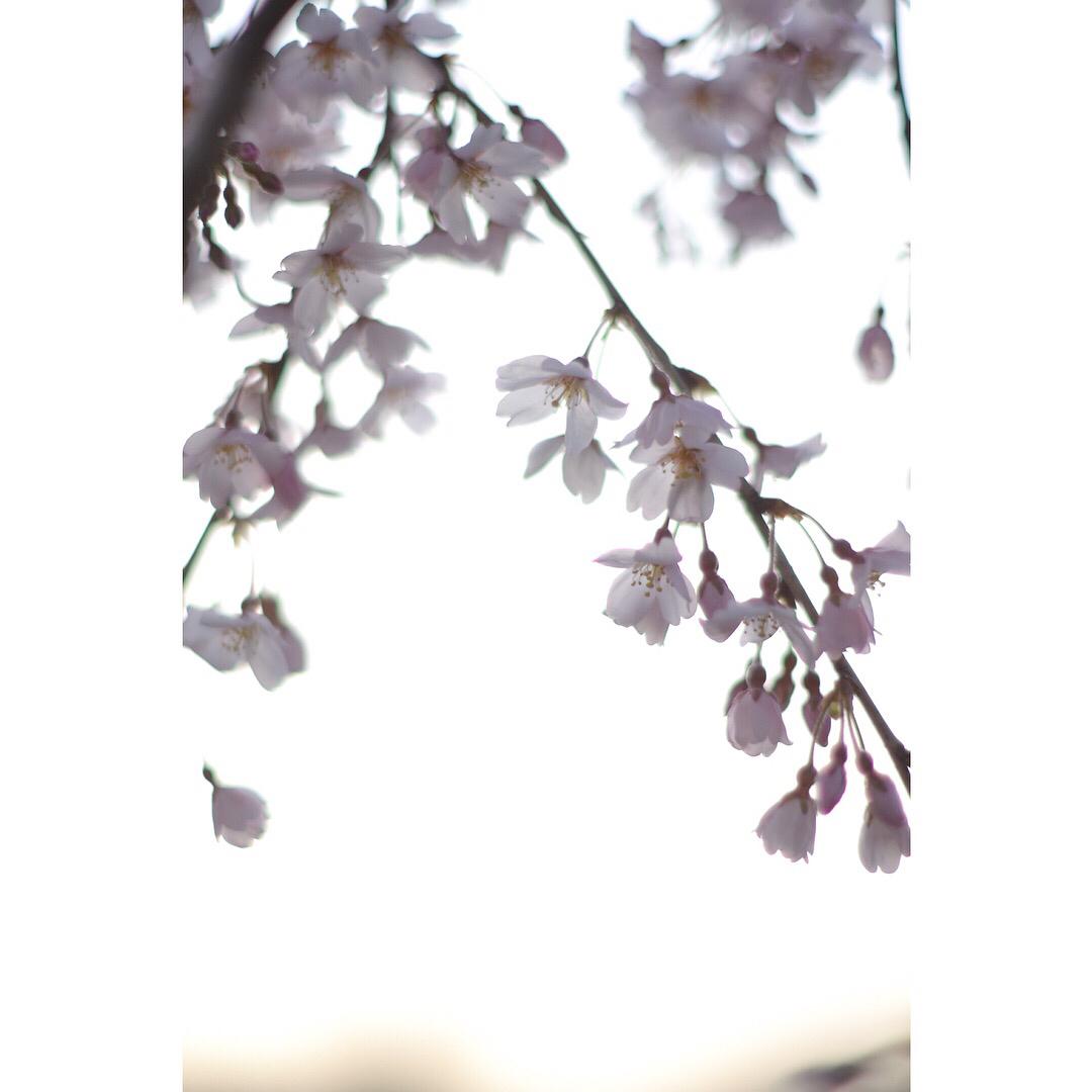 月函 四月のお知らせです。_c0365155_21212955.jpg