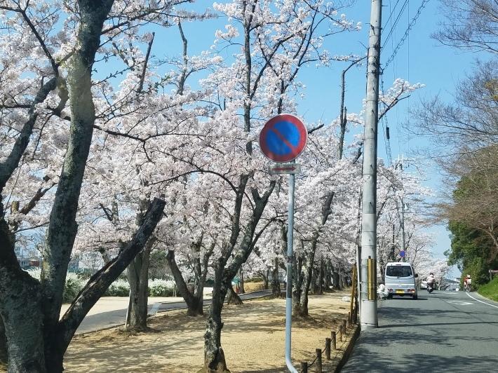 お花見行って来ました‼_c0385359_00010971.jpg