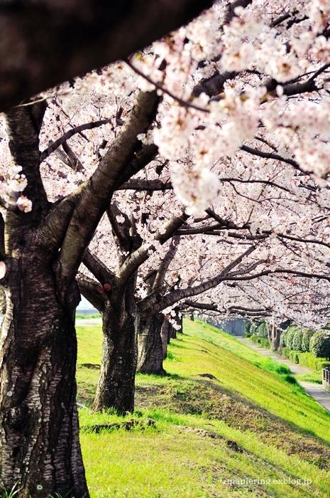 桜2018_f0234062_21454958.jpg