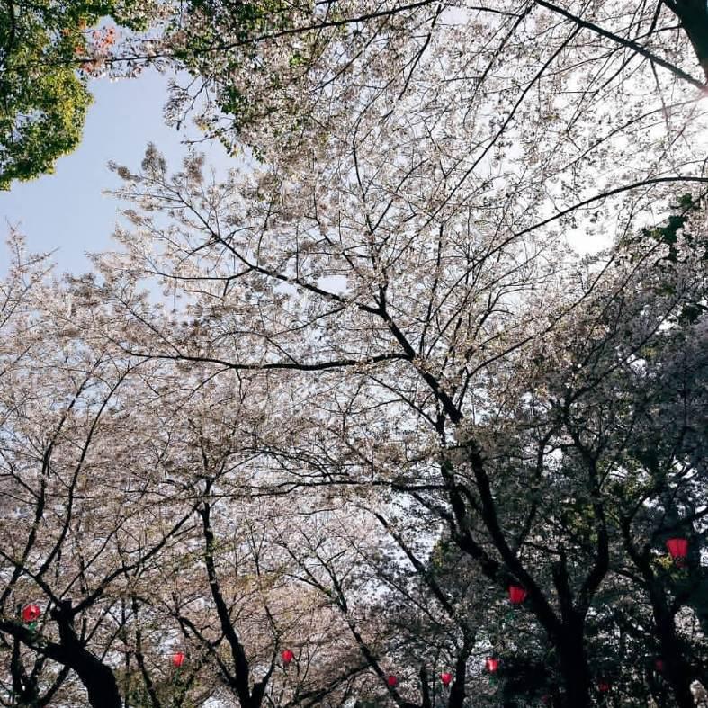 花より団子_a0272765_15555394.jpg