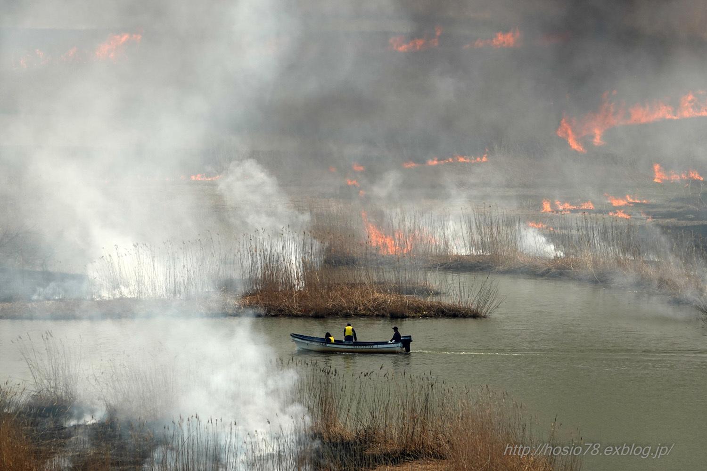 福島潟のヨシ焼_e0214470_17020077.jpg
