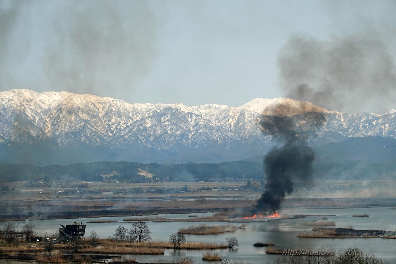 福島潟のヨシ焼_e0214470_17030216.jpg