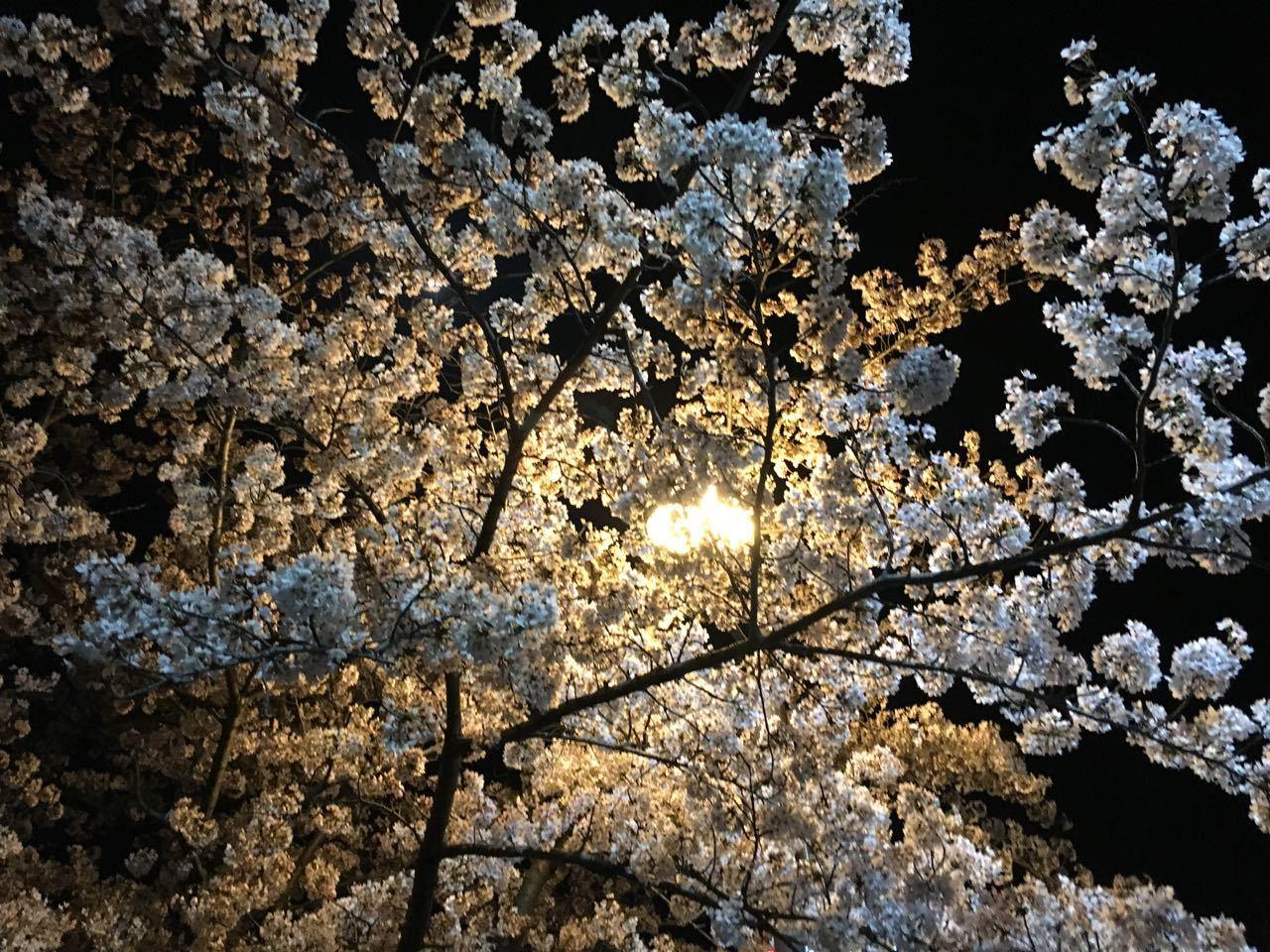 2018.03.30「お花見!」_c0197974_11511952.jpg